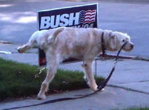 """Good Doggie"", photo from Iowa Blog for America"