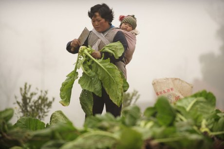 chinaharvestwomanbabygettyimages