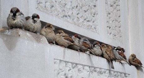 sparrowsstayoutofstormdcafpgetty