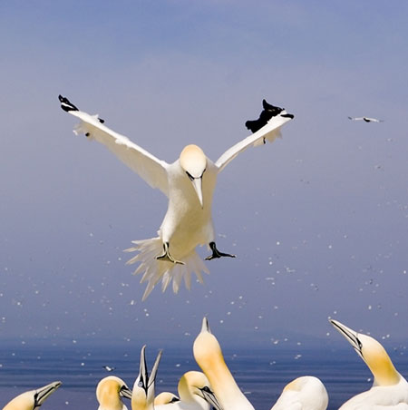 gannetschriswestonbwpa